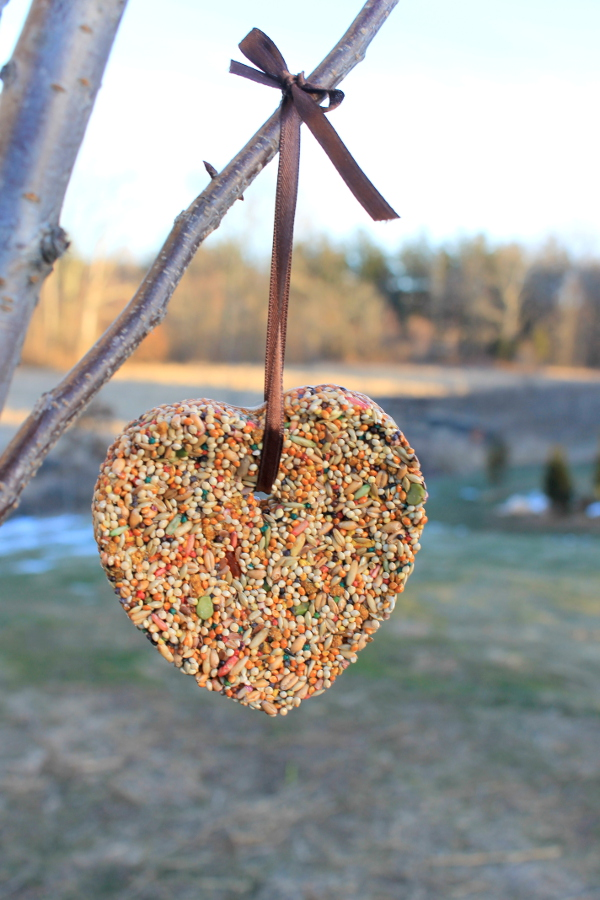 DIY Cookie Cutter Bird Feeder